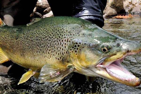 Riverview lodge nz fly fishing lodge new zealand south for New zealand fly fishing